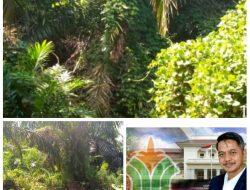 Tanaman Sawit PTPN lV Kebun Unit Gunung Bayu Afdeling 1 (satu) Terlihat Tidak Terawat, Anggaran Perawatan Diduga Kena Tilep Masuk Kantong Pribadi.